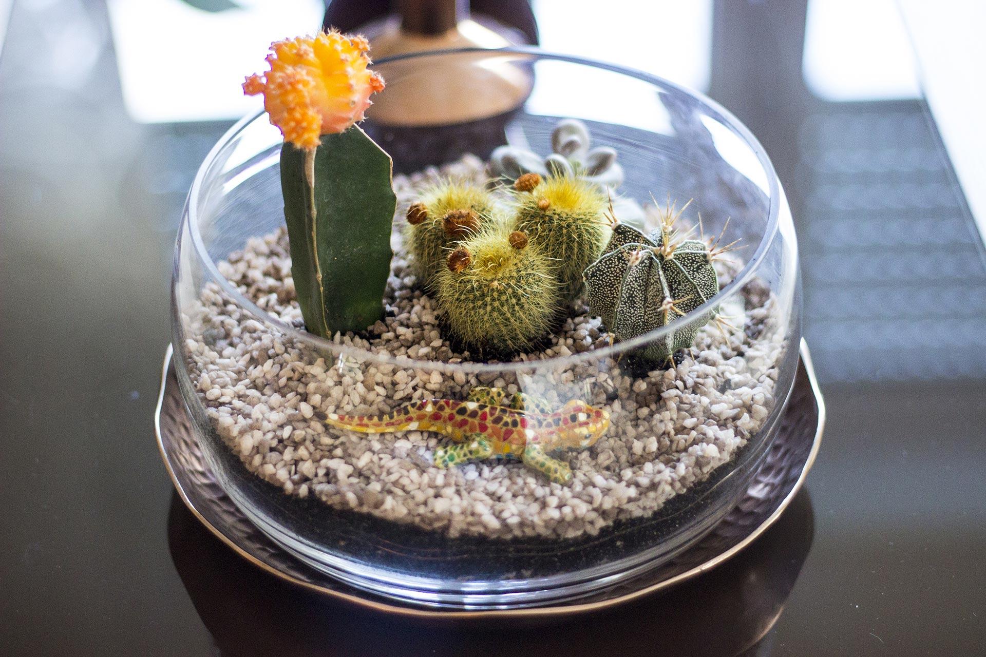 Dieses einfache Sukkulenten-/Kakteen-Terrarium schmückt nun unseren Wohnzimmer-Tisch.